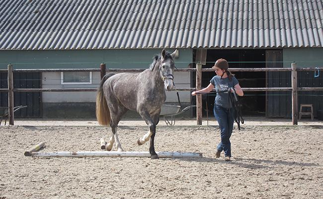 De ideale start van je jonge paard